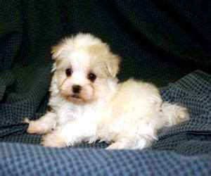 are yorkie poo dogs hypoallergenic best 25 hypoallergenic breed ideas on