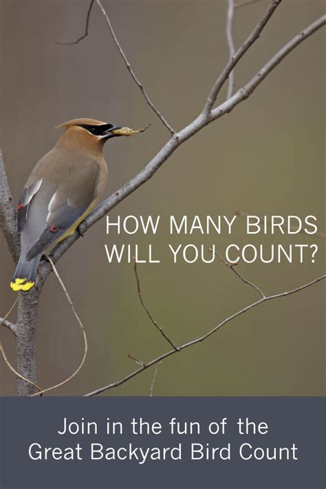 join in the of a national bird count tara wildlife