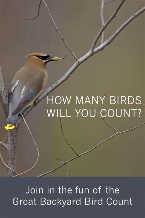 great backyard birdcount join in the fun of a national bird count tara wildlife