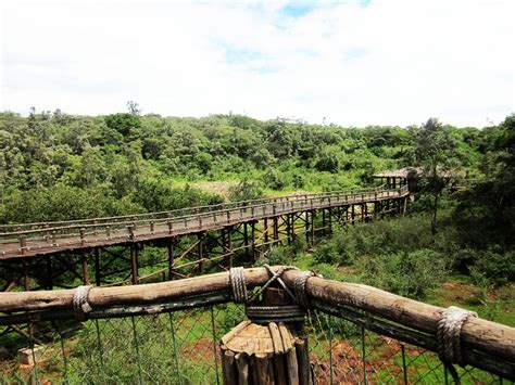 5 Safari Stuff To See by 18 Interesting Places To Visit In Nairobi Kenya How
