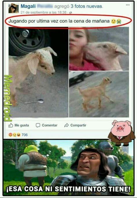 Cabra Meme - pobre cabra meme subido por basti borquez memedroid