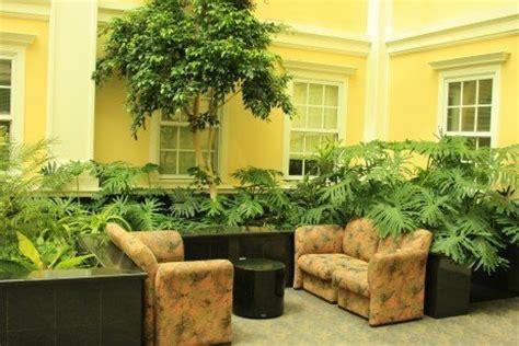 themes in house taken over plantas dentro de casa fazem mal ou bem 2 quartos