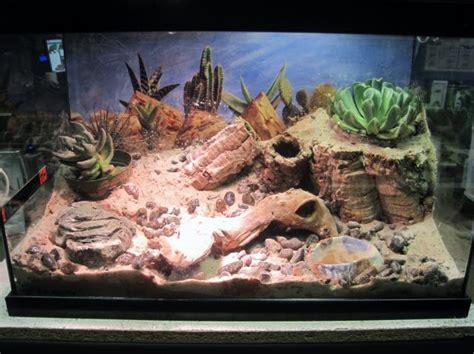 naturalistic desert setup
