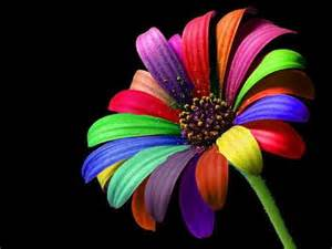color flower color rainbow flower nature awesome image 543751 on