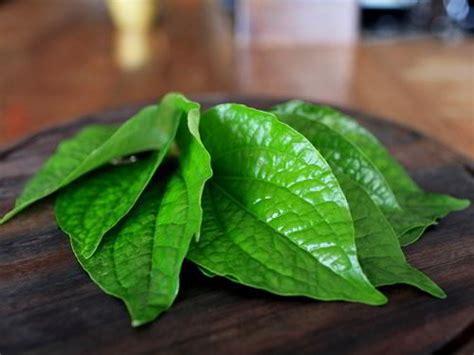manfaat daun sirih  wanita tanaman hias bunga buah