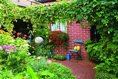 backyard hops growing hops in your backyard can be a breeze home and