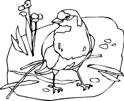 yellowhammer coloring page hummers printable coloring pages coloring pages