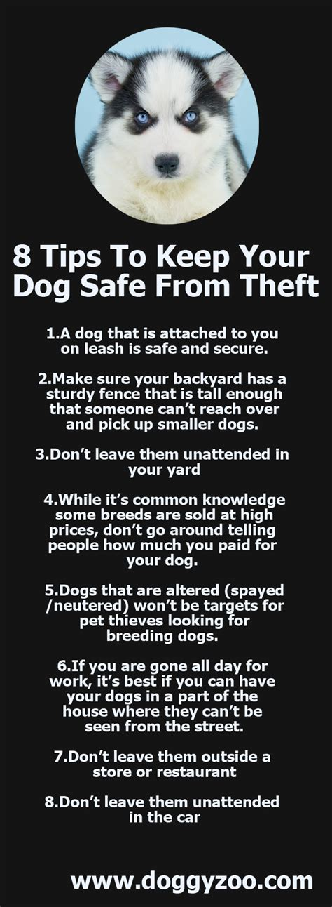 8 Tips To Keep From Arguing With Your Partner by 8 Tips To Keep Your Safe From Theft Doggyzoo
