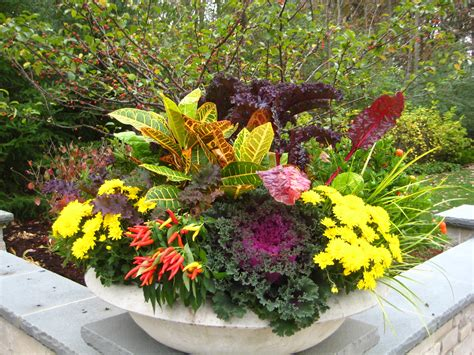 fall plants fall annual container ideas midwestern plants