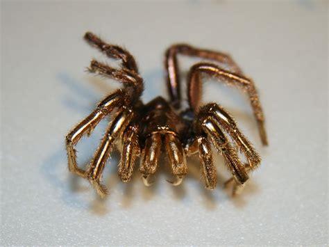 Idw065 Gold Led Light Size 15 file gold spider sem sle jpg wikimedia commons