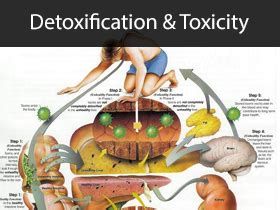 Def Detoxing by Detoxification D 233 Finition What Is