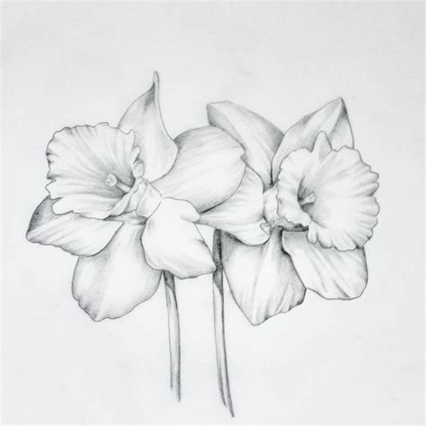 march flower tattoo 126 best flowers drawing of daffodil images on