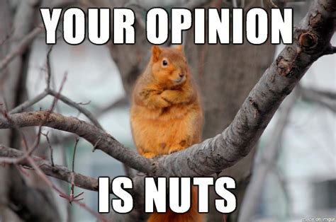 Imgur Make A Meme - my gift to you imgur a new meme disagreeing squirrel