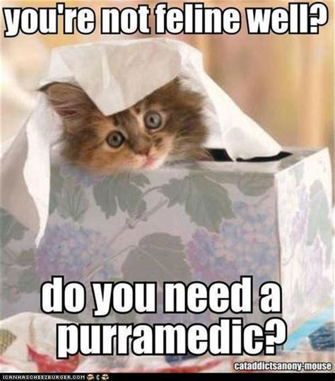 Funny Feel Better Memes - lol cats funny sick pictures dump a day