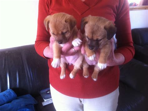 really really puppies really puppies 4 sale worcester worcestershire pets4homes