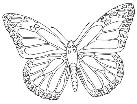 Butterflies Images Outline by Butterfly Outline Outlines Outlines Butterfly And Craft