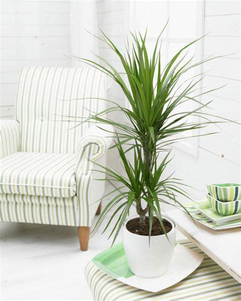 schattenpflanzen zimmer 10 schattenpflanzen f 252 r die dunkelsten ecken zu hause
