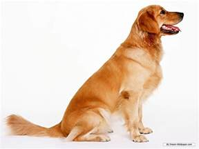 Dogs Dogs Dogs Wallpaper 16762076 Fanpop
