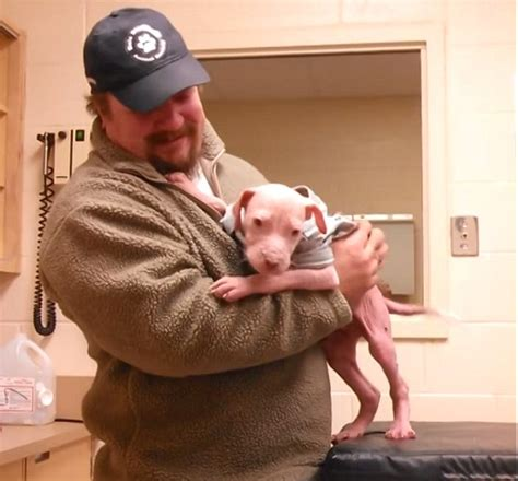 when do babies color become permanent heartwarming moment a pit bull puppy reunites with the