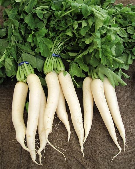Ripped List White Rawis 5 vitamin packed asian vegetables you can grow in your garden the grid news