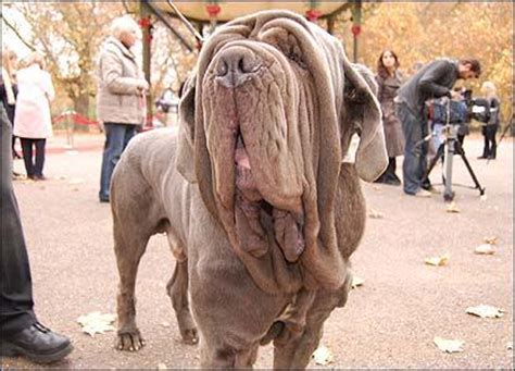 hagrid s dogs name nerdtests test harry potter quiz