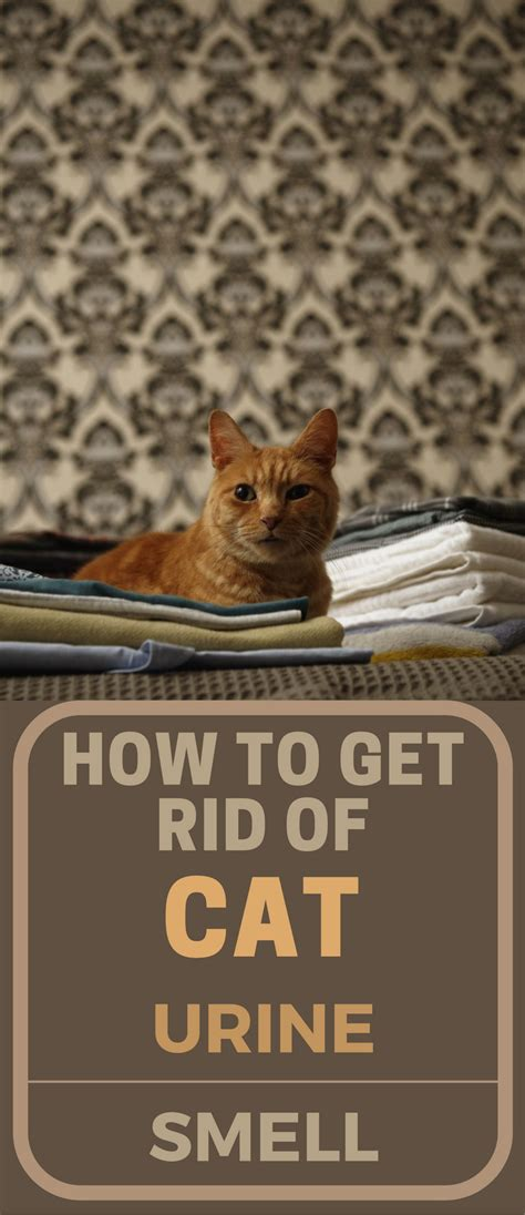 how to get cat urine out of a rug how to get rid of cat urine smell topcleaningtips