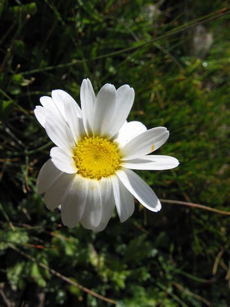 fiori stagione fiori per matrimonio fiori di stagione per matrimonio