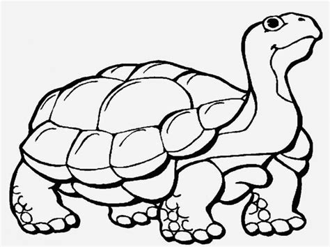 Cute Baby Duck Coloring Page Colorings Net Snapping Turtle Coloring Pages