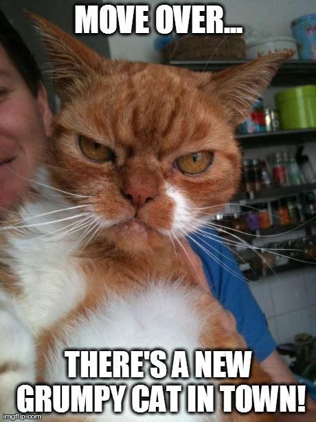 Evil Cat Meme - evil cat meme pictures to pin on pinterest pinsdaddy