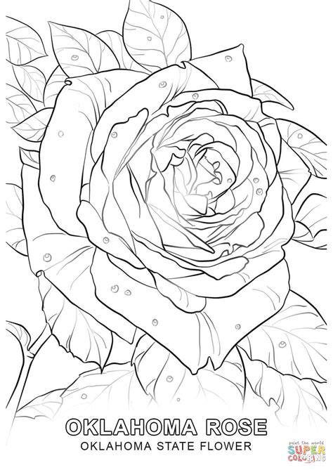 indiana state flower coloring coloring pages