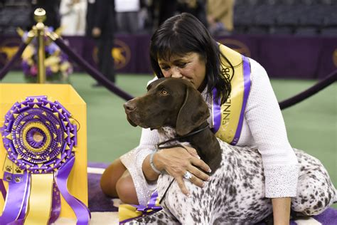 Best In Show Puppy 15kg german shorthaired pointer wins westminster kennel club s best in show fortune