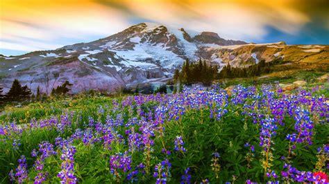 beautiful nature landscape in spring wallpapers and images beautiful spring landscapes wallpapers www imgkid com