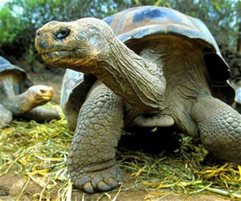 tartarughe marine alimentazione tartaruga mille animali