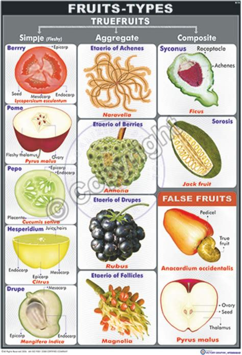 3 fruit types types of fruits pictures the best fruit 2018