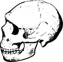 Skull clip art free vector 4vector