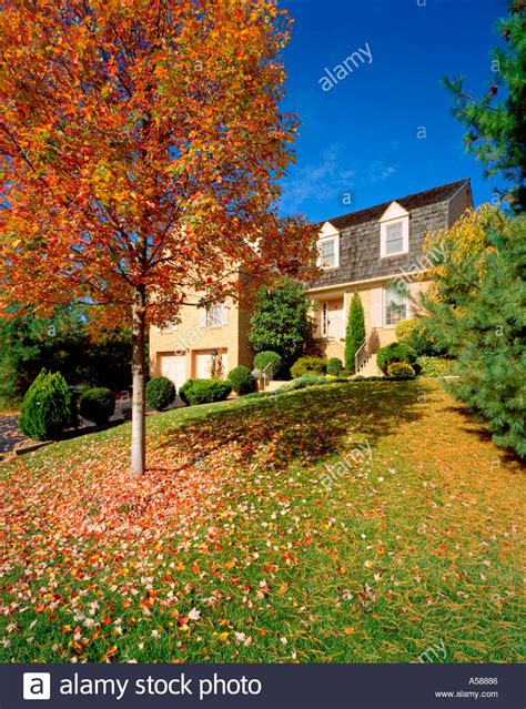 Maple tree with colorful autumn leaves in sloping front