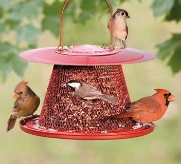 top 3 bird feeders for cardinals feedingnature com