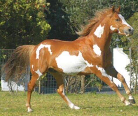 painting horses liv s farm paint