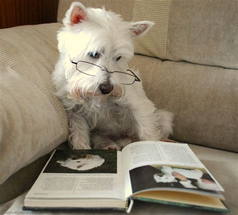 puppy book adorable pictures of dogs reading books n