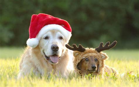 christmas wallpaper with dogs christmas dog wallpaper wallpapers9