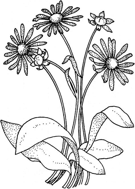 daisy flower  flower bouquet coloring page