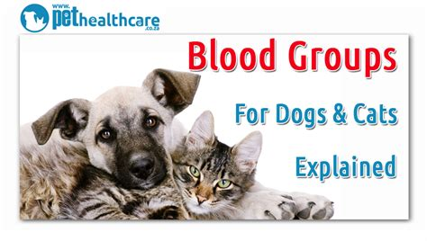 do dogs blood types cat and blood types pethealthcare co zadog and cat blood types