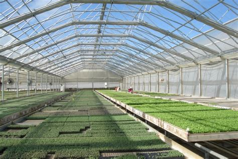Big Greenhouses by Why Construction Of Big Greenhouses Halted In Russian