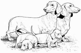 dachshund coloring pages az coloring pages - Dachshund Coloring Pages