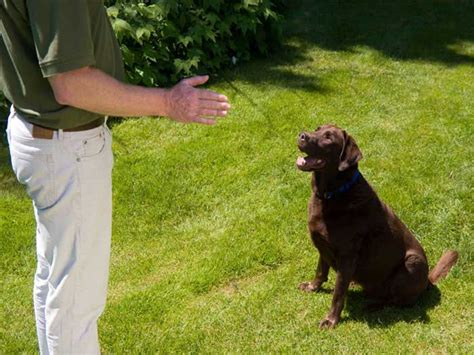 dogs 2 trainer benefits of hiring a professional trainer bakery