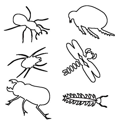 Insect Coloring Pages For Children Bugs Coloring Pages