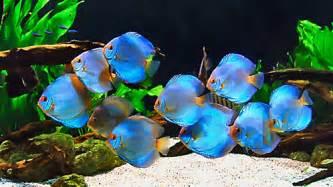 TOP 7 AQUARIUM DECORATING TIPS   Home aquarium tips   Explore Fluval