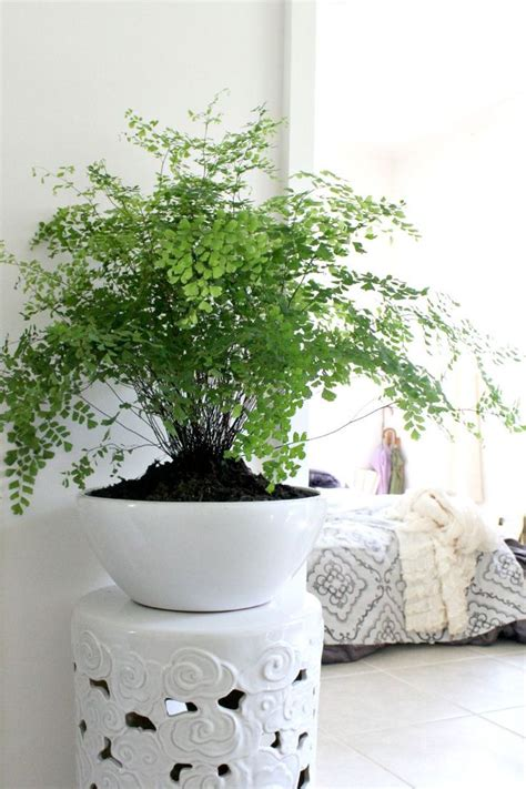 Best Plant For Indoor Low Light by 10 Id 233 Es Pour Mettre Des Plantes Dans Son Int 233 Rieur
