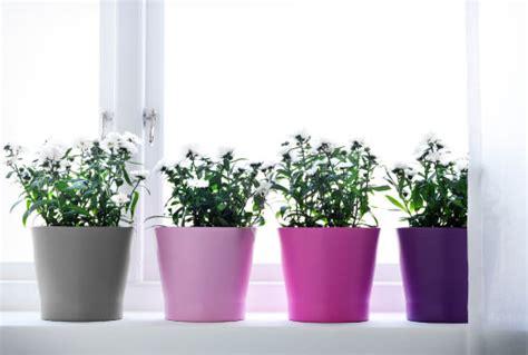 pots for plants ikea plants plant pots