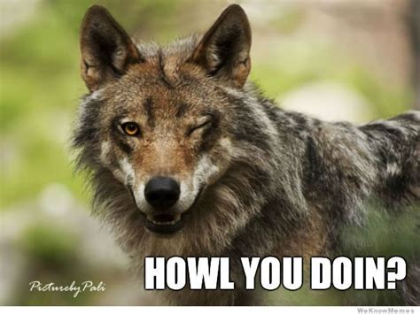 Wolf Meme Generator - ridiculously photogenic wolf weknowmemes